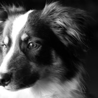 Black and White Dog in Black and White