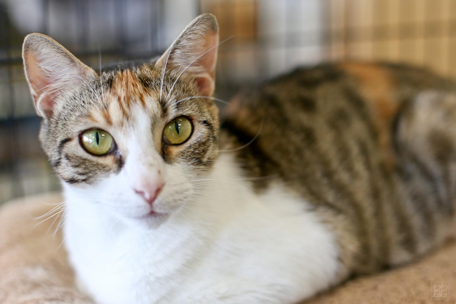 Hollywood Humane Society Cats