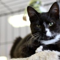 Animals for Adoption at Dublin Laurens Humane Society